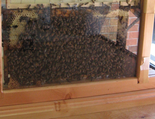 West Kootenay Schools Abuzz With Observation Hives