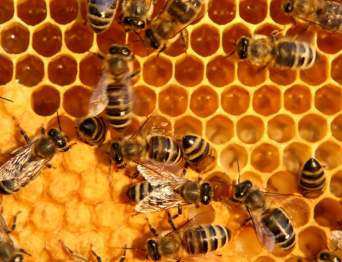 Tackling Bee Health in Creston