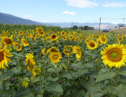 Enhancing Bee Forage in the Boundary Area of BC