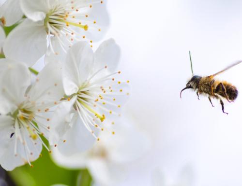 Building a Bee Barn